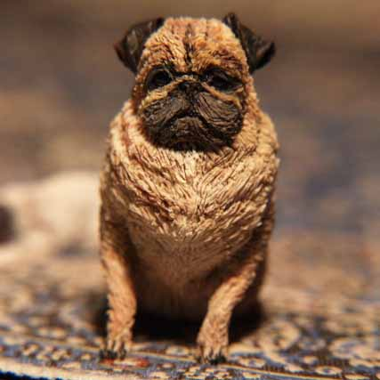 1/12th scale pug sitting