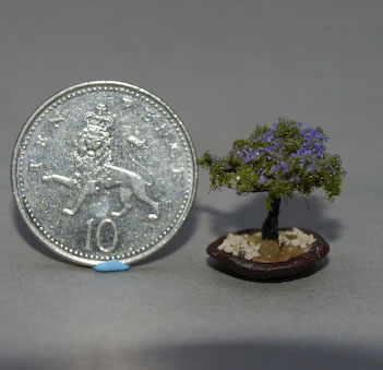 purple Bonsai