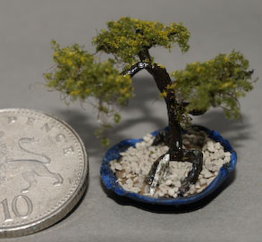 dark blue pot bonsai